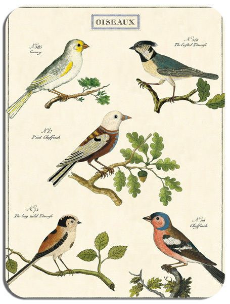 Vintage French Birds Chart Poster Mouse Mat. Ornithology Birder Art Mouse Pad