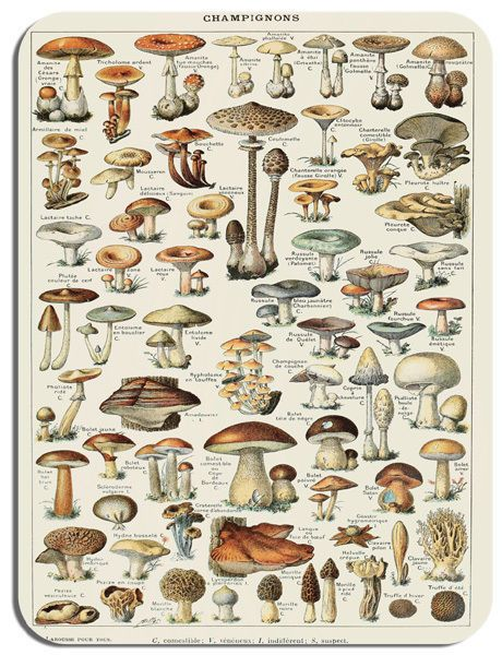 Vintage French Mushroom Identification Chart Mouse Mat. Poster Mouse Pad Gift